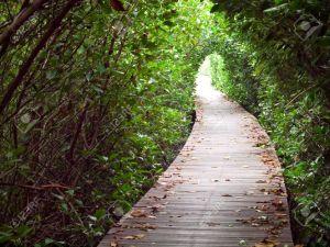 8435259-promenade-par-tunnel-de-passage-de-la-for-t-de-mangroves-laem-phak-bia-ban-laem-phetchaburi-tha-land-banque-dimages
